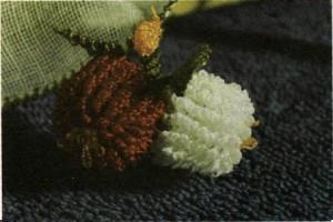 Zürefa ve kök bıyık tomurcuk boru ve yapraklar tomurcuk